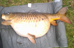 Blog carpiste nico et la carpe powercarp for Tarif grosse carpe